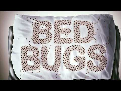 Bed bug exterminator, Bed Bug Treatment & Bed Bug Heat Treatment Tulsa Metro, Dead Bug Walkin LLC